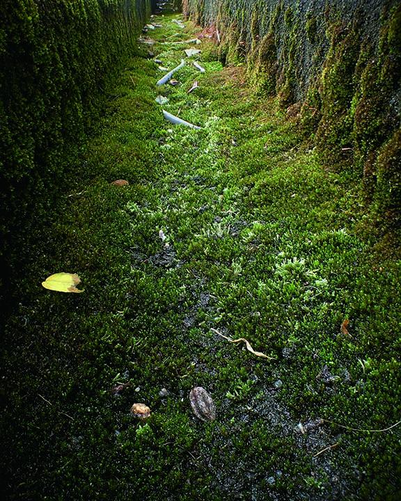 09_KusunokiRyouhei_Ecology of rain gutters_cryohei kusunoki=Ruber hose